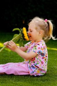 Sonnenblume - Phytotherapie